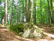 Pomnik przyrody